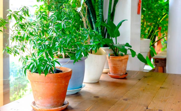 Beneficios de las plantas de interior
