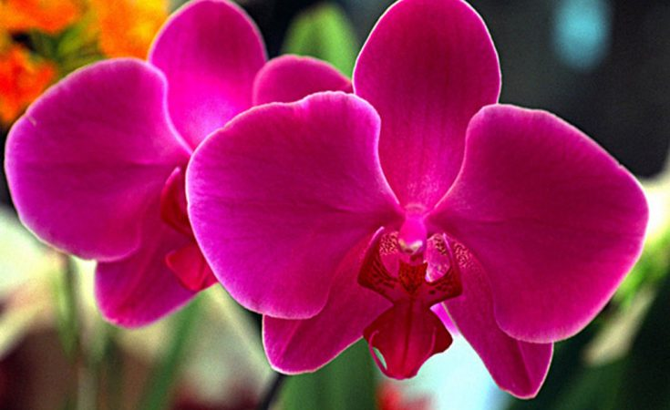 cuidados de las orquídeas mundo flores