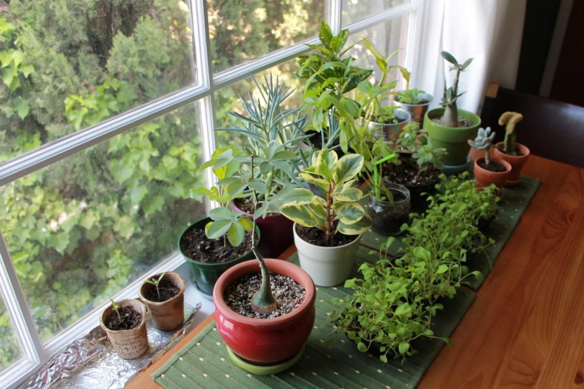 Cuidados plantas de interior | Mundo Flores