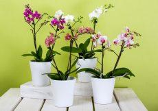 El cultivo de las orquídeas