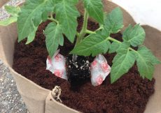 Mejores fertilizantes para el cultivo de flores