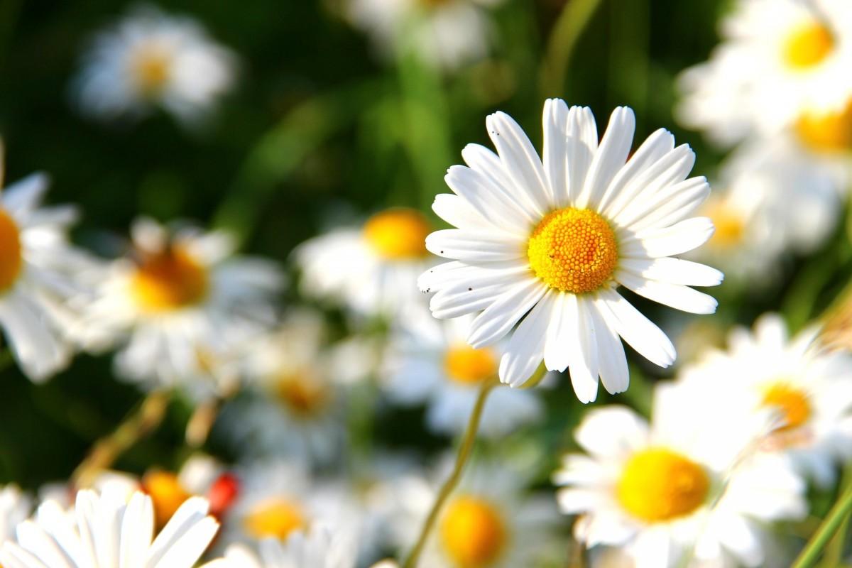 Mundo flores