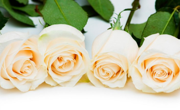 Significado del color de las rosas