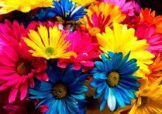 Significado del color de las flores