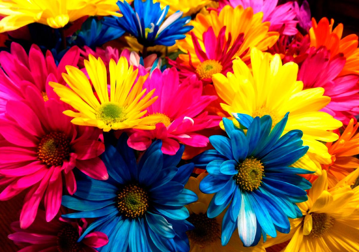 Significado del color de las flores mundo flores for Jardines con gravilla de colores